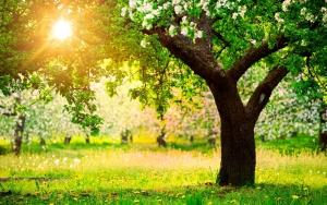 солнце и лес