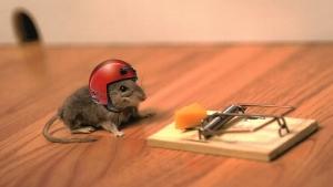страх ошибок, мышь